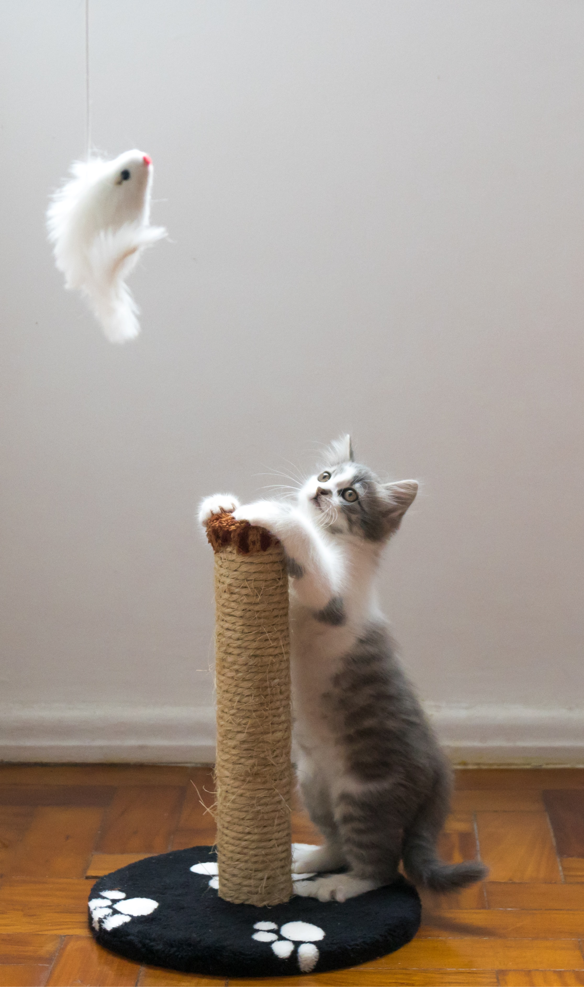 Top Tips on Kitten Care for the First Few Weeks