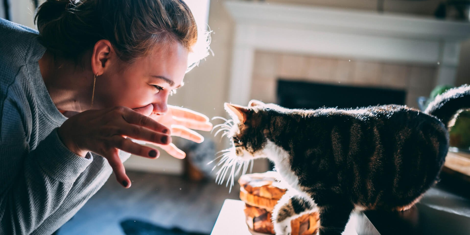 Our Best Tips on How to Bond with Your Cat
